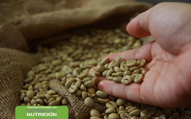 Perdida de peso cafe verde